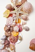 stock photo of scallop shell  - nice shells - JPG