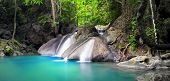 picture of rainforest  - Beautiful nature background - JPG