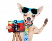 Постер, плакат: Photographer Dog Camera