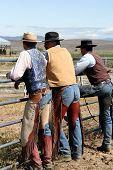 pic of brahma-bull  - hard working cowboys looking off in the valley for a plan - JPG