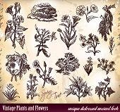 Vintage plantas e flores com antiguidade angustiado olhar esboçado