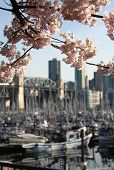 Vancouver Spring Blossoms