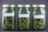 Assorted cannabis bud strains and glass jars over grey background - medical marijuana dispensary con poster