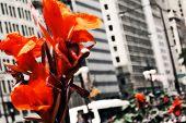 Cidade flores 3