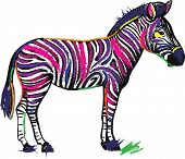 Zebra Animal In Rainbow Color Stripes Isolated On White Background. Vector Creative Illustration For poster