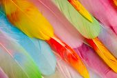 Multi Colored And Colorful Tropical Feather Background.background From Feathers Of Tropical Birds. B poster