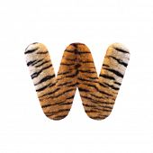 Tiger letter W - Lower-case 3d Feline fur font isolated on white background. This alphabet is perfec poster
