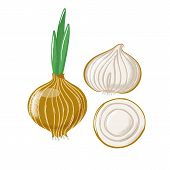 Bulb Onion Set - Whole, Half And Sliced, Top And Side View, Textured Vector Illustration Isolated On poster