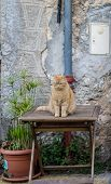 A Grumpy Lokking Cat Sitting On A Outdoor-table poster