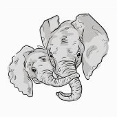 Hand Drawn Sketch Of Elephant Family Portraits, Front View. Cute Illustration Of Elephant Family On  poster