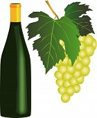 White Wine.Eps