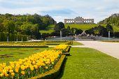 foto of schoenbrunn  - Schonbrunn Palace Gardens at Vienna in spring - JPG
