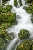 Flowing Water And Green Moss