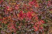 Atmosférica otoño