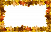 stock photo of fall leaves  - natural colorful autumn leaves frame on white - JPG
