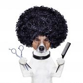 picture of scissors  - hairdresser dog with a scissors and  comb - JPG