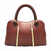 foto of crocodiles  - Crocodile leather women - JPG