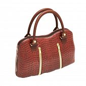 picture of crocodile  - Crocodile leather women - JPG