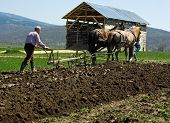 stock photo of horse plowing  - Two men work on the field with horses - JPG
