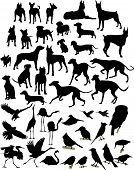 stock photo of bird-dog  - Various silhouettes of big and small dogs and birds - JPG
