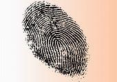 Detailed Fingerprint