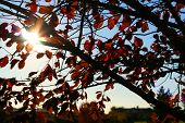 foto of leaf-blower  - high quality picture of the sun shining through an autumn tree - JPG