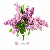 Bouquet Of Lilac In A Transparent Vase
