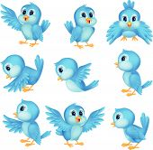 image of lovable  - Vector illustration of Cute blue bird cartoon - JPG