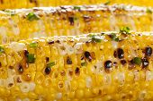 foto of sweet-corn  - Organic Grilled Corn on the Cob Ready to Eat - JPG