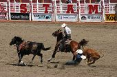 Cowboy Wrestling Steer To The Ground