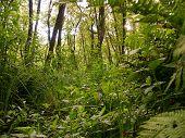 Leafy Wood
