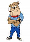 Thug Bulldog