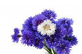 Blue And White Cornflower Bouquet