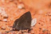 Folha de roxo azul borboleta
