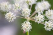 Flower Buds Of Wild Plants