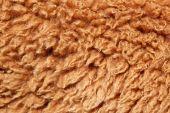Alpaca Wool Background