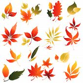 Set Of Vector Autumn Leaves Design Elements
