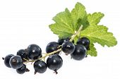 Isolated Black Currants