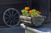 Flowers In The Wooden Pot