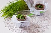 Seedlings In Plantings Pots On Lace Napkin