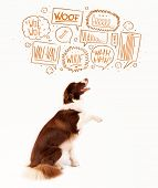 Cute brown and white border collie with barking speech bubbles above his head
