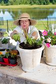 Senior Lady Potting Up Houseplants