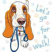 Vector Baby Dog Basset Hound Breed
