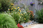 stock photo of nativity  - Beautiful Australian garden full of native plants and flowers - JPG
