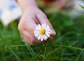 Baby hand with daisy flower
