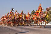 Camel Mounted Band on Parade