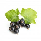 Ribes nigrum (Blackcurrant) fruit and leaves