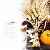 Autumn composition ( pumpkins, wheat and corn on old wooden table). Thanksgiving day concept  (with