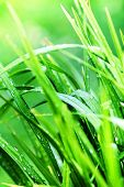 Green Grass Background Macro. Abstract Natural Backgrounds With Beauty Bokeh.
