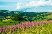 Landscape In The Carpathians With Fireweed